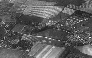Apple Orchards at Long Rede, Barming, Kent 1934 (Album Ref 18, 13)